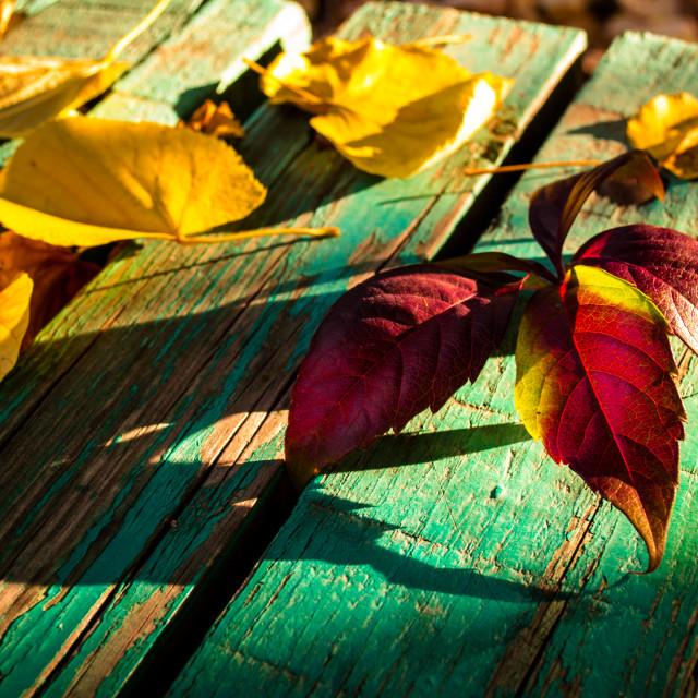 """the fall again"" stock image"