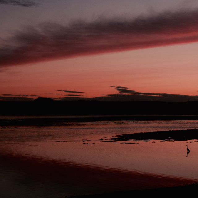 """""""Lone Heron at sunset"""" stock image"""