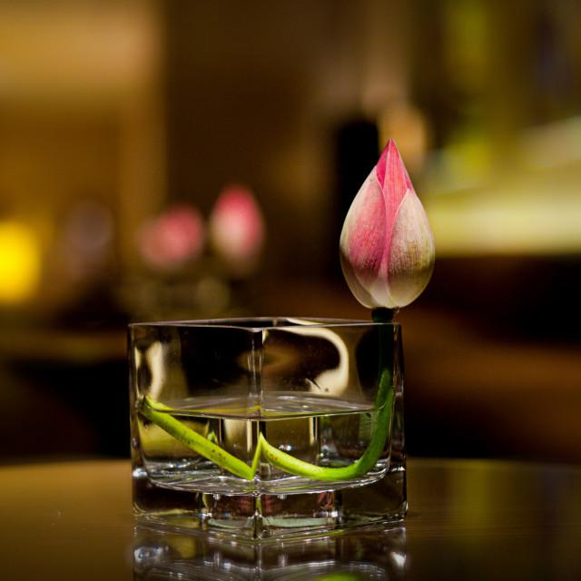 """Lotus in interior"" stock image"