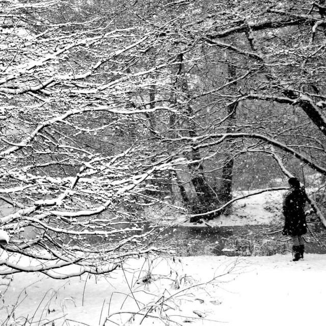 """Snow Scene"" stock image"