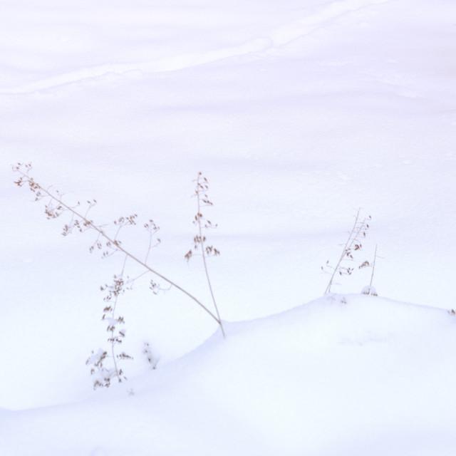 """Winter snow garden"" stock image"