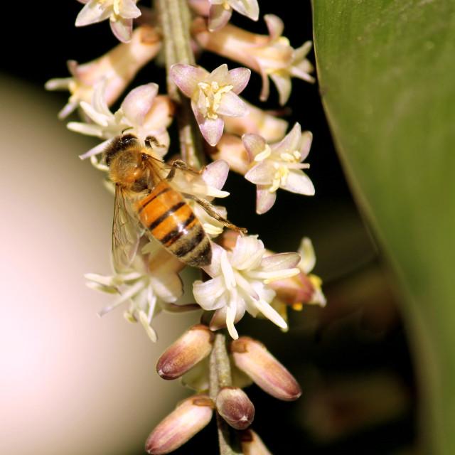 """Dangle Bee So Lightly"" stock image"