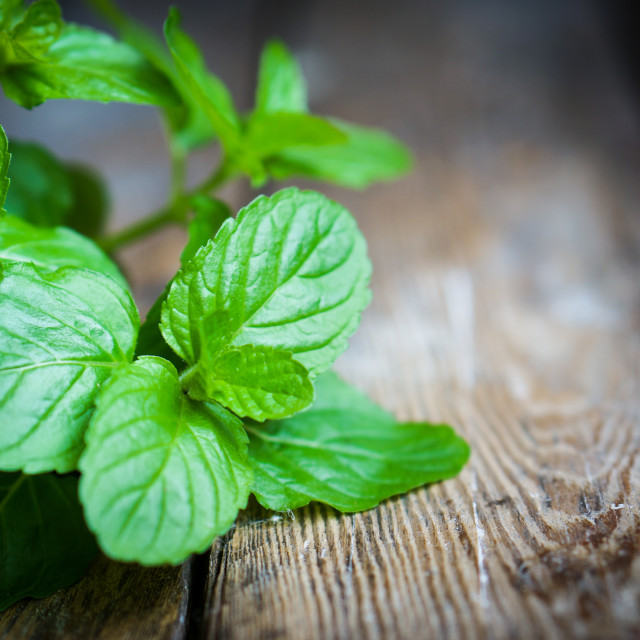 """""""Fresh mint on rustic wooden background"""" stock image"""