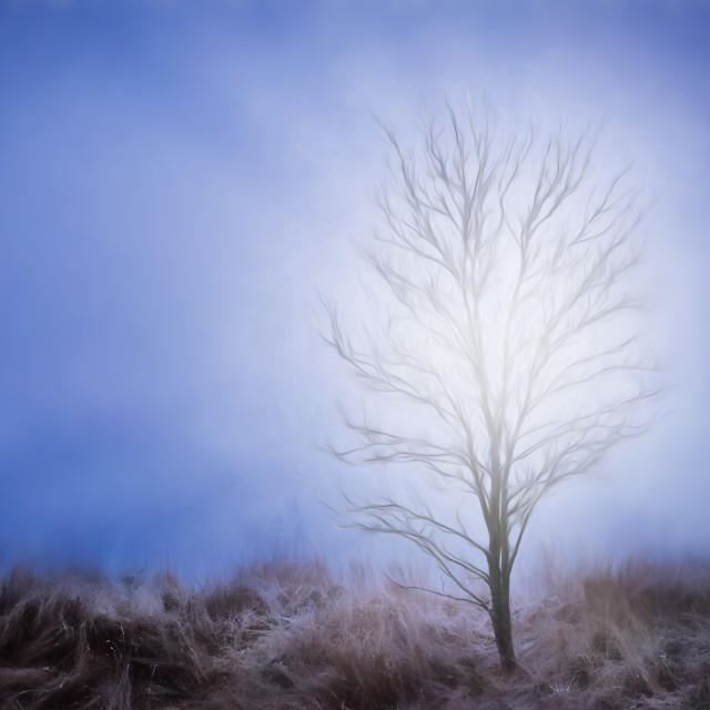 """Fairytale tree"" stock image"