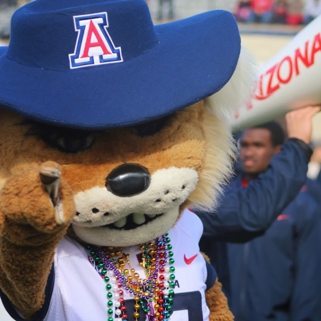 """Arizona Wildcat Mascot"" stock image"