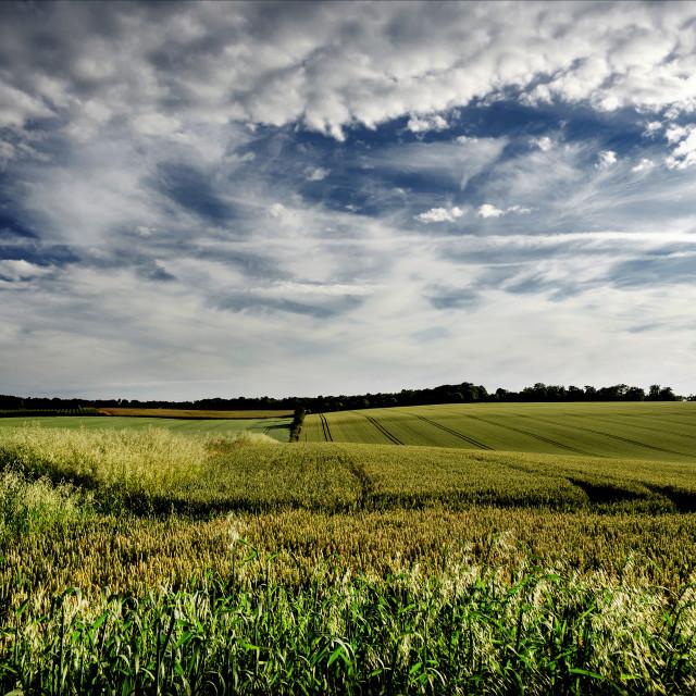 """Crop fields."" stock image"