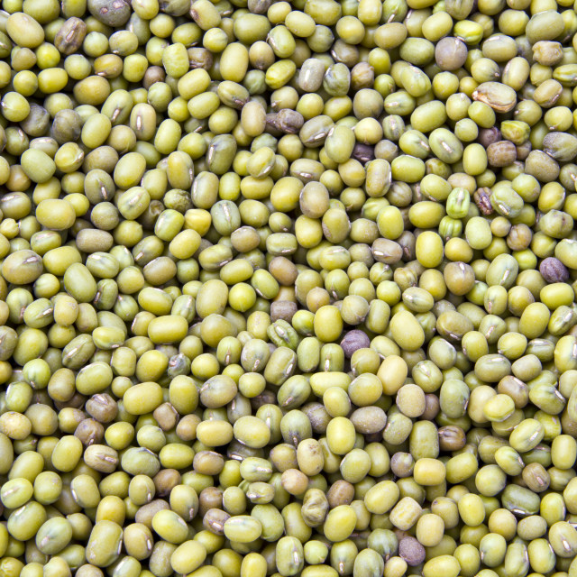 """Mung Bean"" stock image"