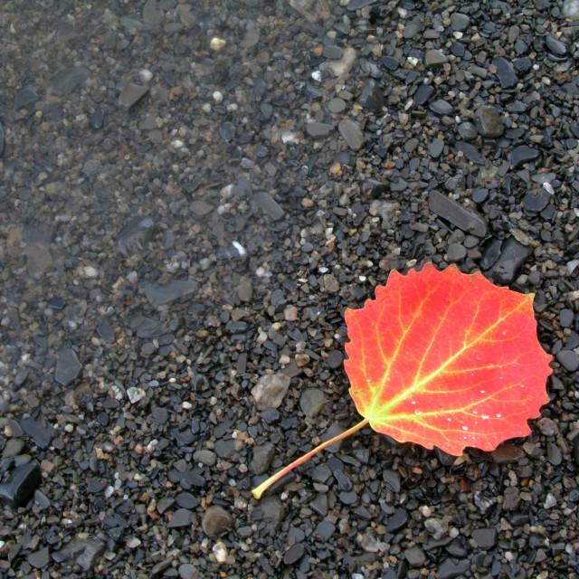 """""""Colorful Autumn Leaf"""" stock image"""