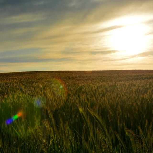 """Harvest"" stock image"