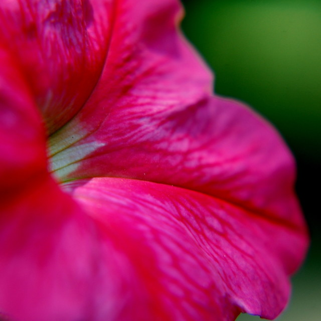 """Sunday Afternoon Flower"" stock image"