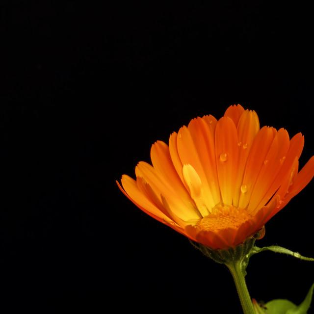 """""""Orange Dropped"""" stock image"""