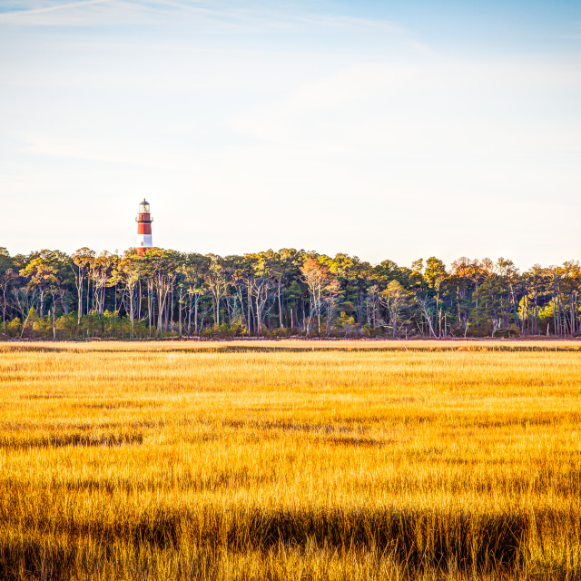 """Chincoteague Lighthouse"" stock image"