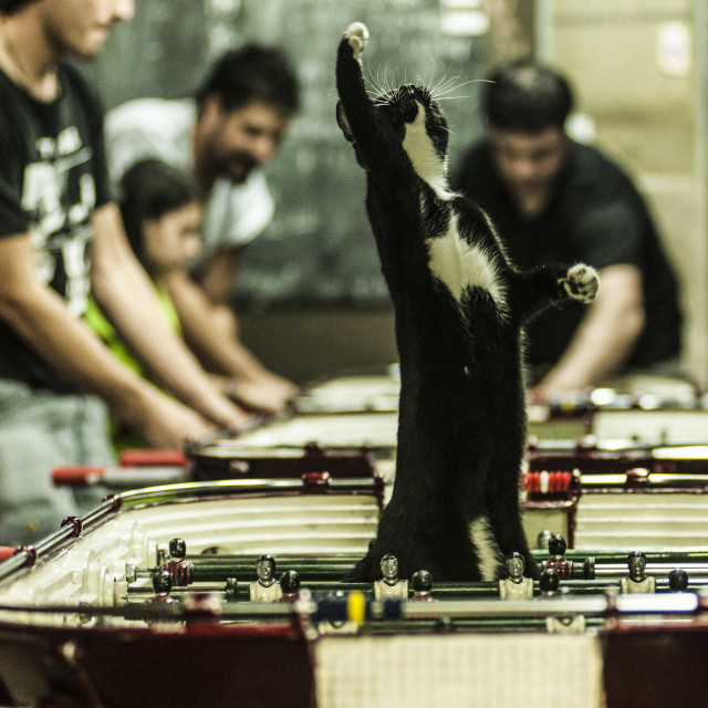 """""""Cat in foosball table"""" stock image"""