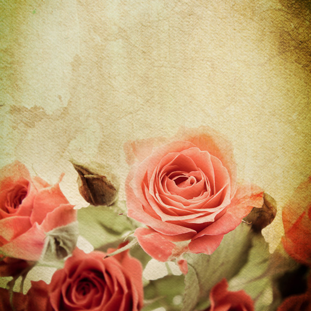 """Roses watercolour"" stock image"