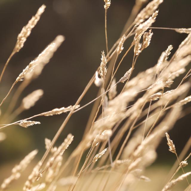 """autumn grass"" stock image"
