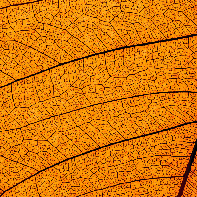 """""""leaf structure"""" stock image"""