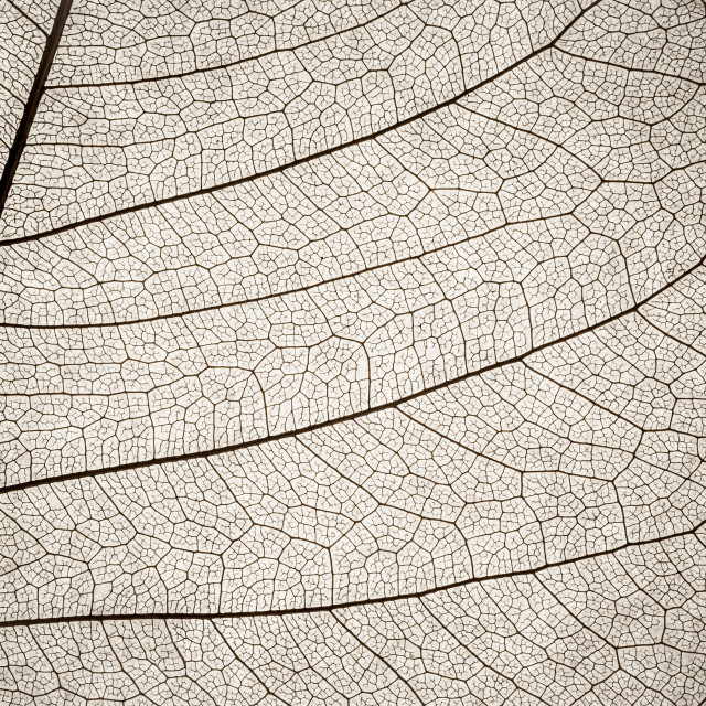 """""""leaf cell macro"""" stock image"""