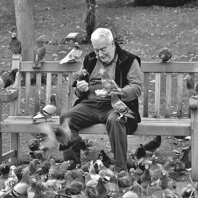 """Birdman of Leamington"" stock image"