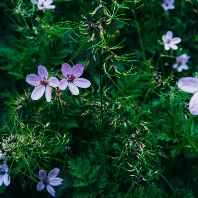 """Small beautiful flowers"" stock image"