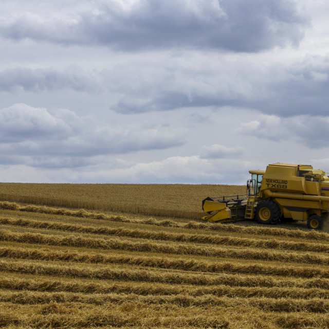 """""""Combine harvester with space for copy"""" stock image"""