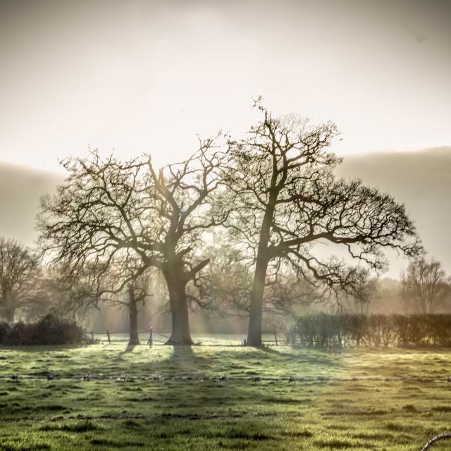 """Tree's in late afternoon sun"" stock image"