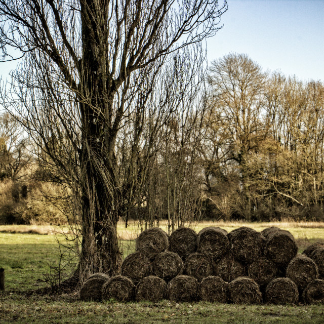 """""""Bails by a tree"""" stock image"""