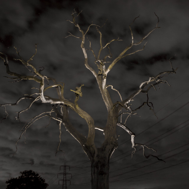 """Eerie Dead Tree"" stock image"