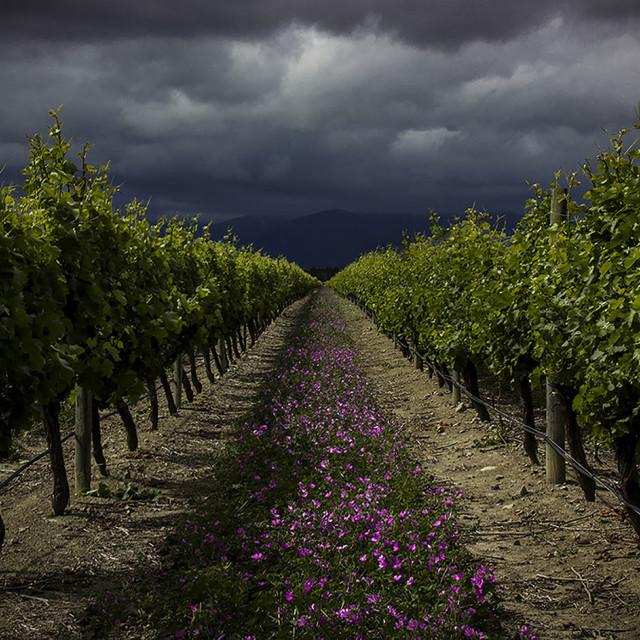 """Summer Storm, New Zealand"" stock image"