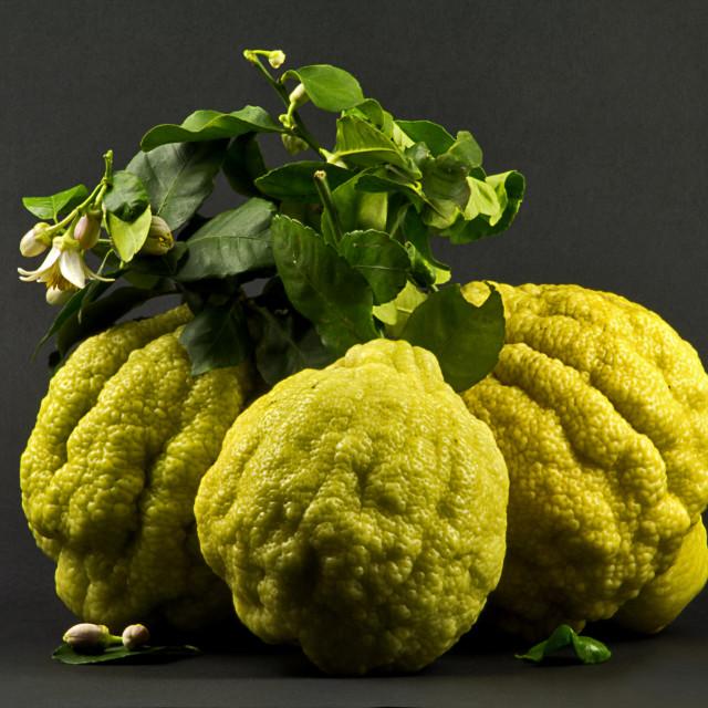 """Italian lemmons"" stock image"