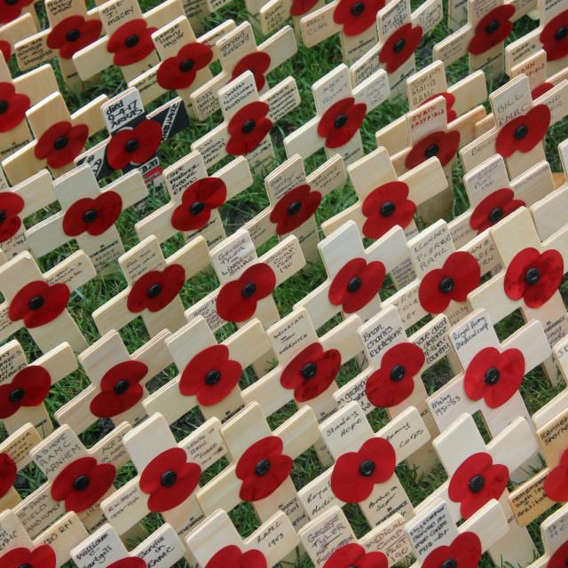 """Poppy memorials"" stock image"