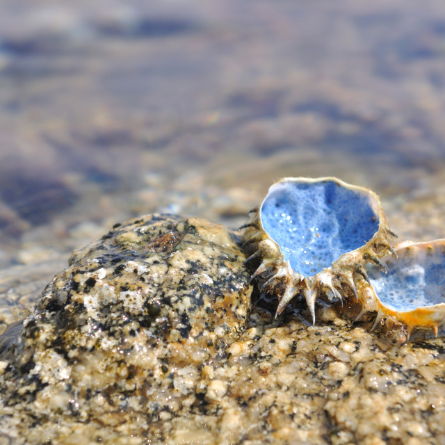 """blue shell at the seaside"" stock image"