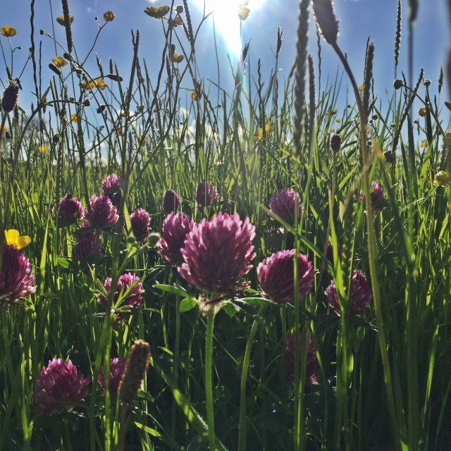 """""""Summer in the meadow"""" stock image"""