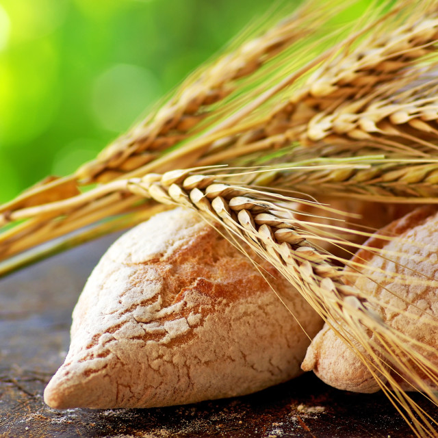 """Portuguese bread and spikes of wheat."" stock image"