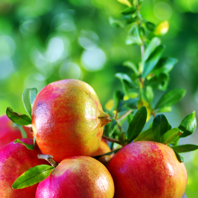 """Ripe Pomegranates on table"" stock image"