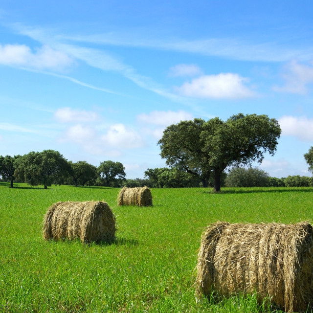"""""""Hay bayle in the field of Portugal."""" stock image"""