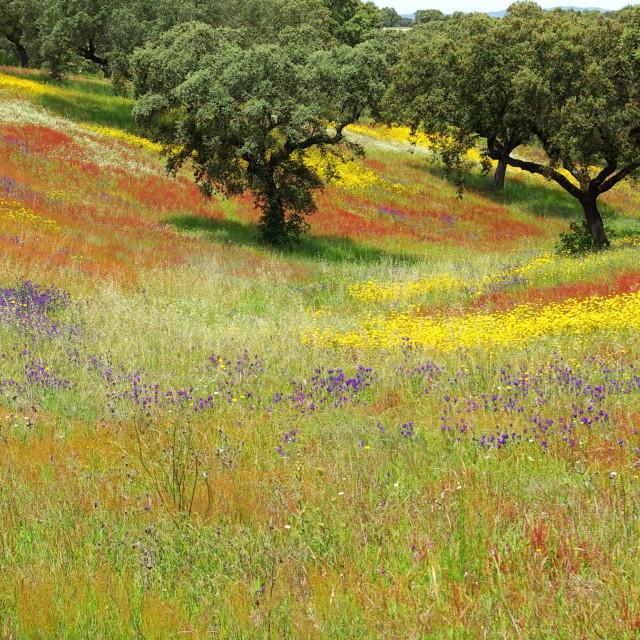 """Colored field in alentejo in the Spring."" stock image"