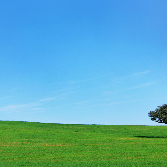 """""""Isolated tree in the green field"""" stock image"""