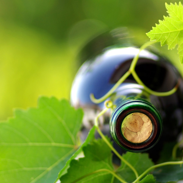 """Bottle of red wine and green leaves."" stock image"