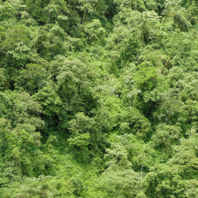 """rainforest"" stock image"