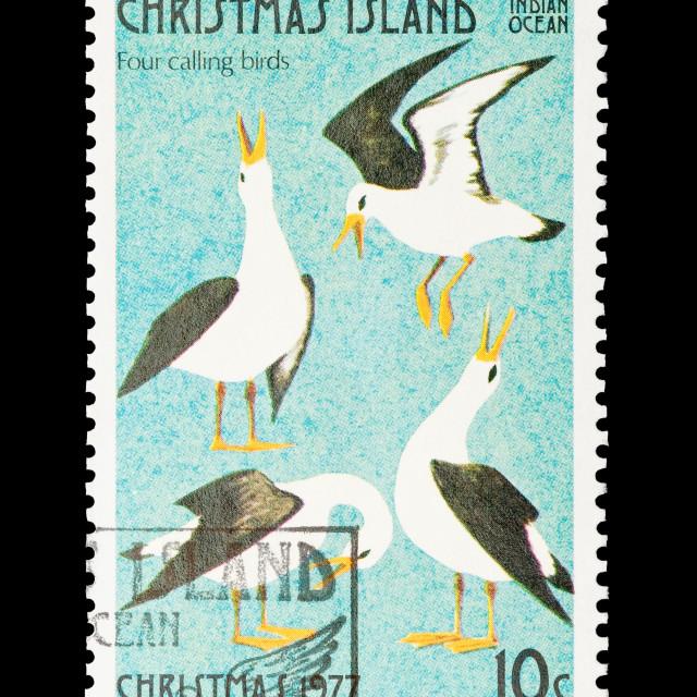 """four calling birds"" stock image"