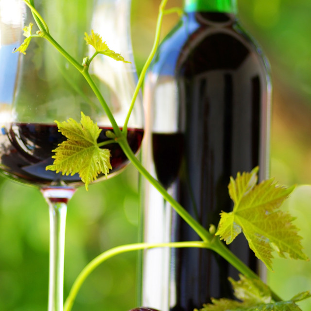 """""""Glass and bottle of wine produced in the region Alentejo, Portugal"""" stock image"""