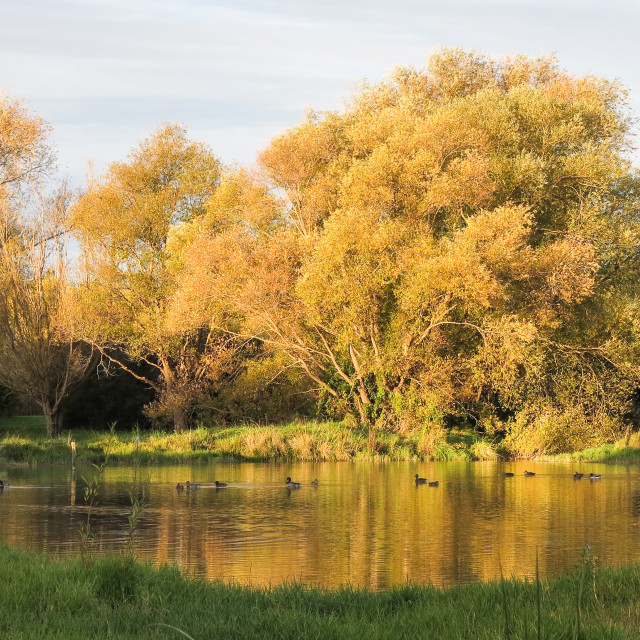 """golden pond"" stock image"