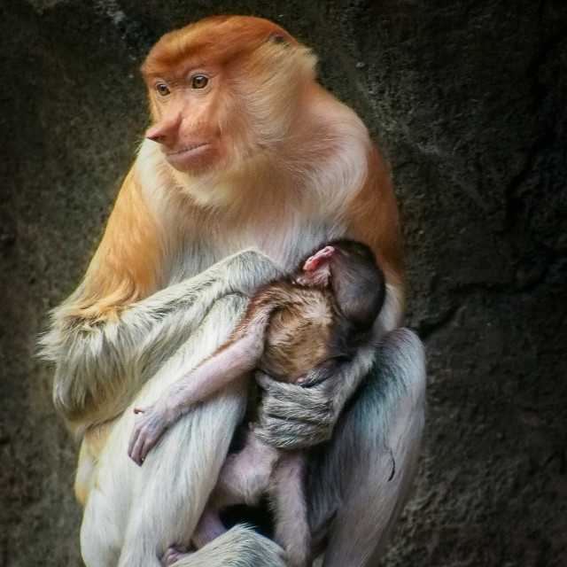"""""""mother's love"""" stock image"""