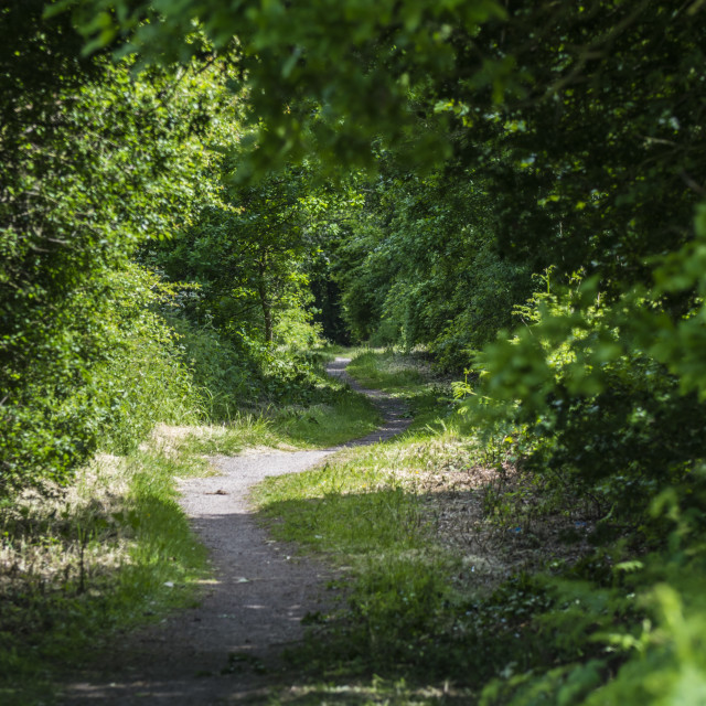 """""""Wooded Path"""" stock image"""