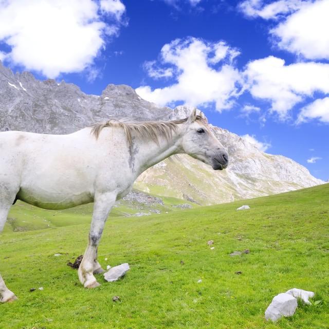 """""""Wild horse."""" stock image"""