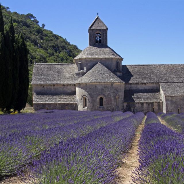 """Senanque, abbay with lavander"" stock image"
