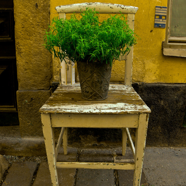 """""""Flower on Chair"""" stock image"""