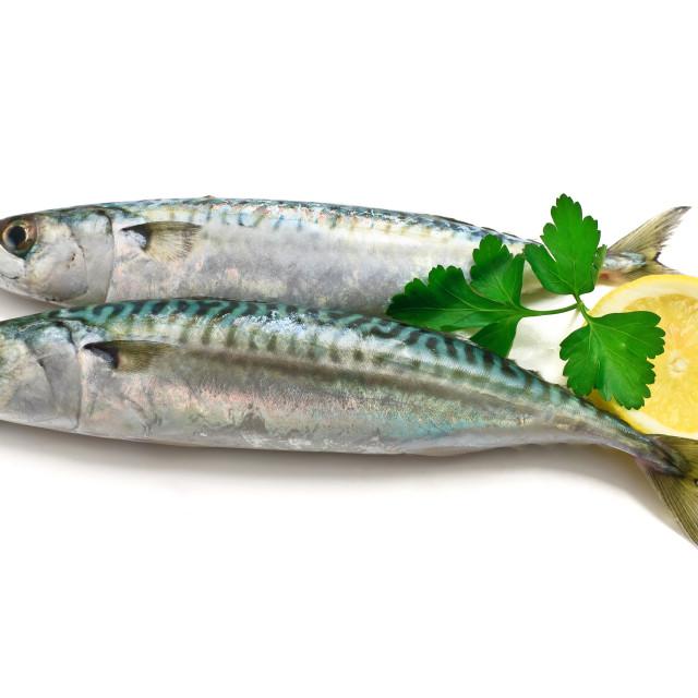"""two mackerel with lemon"" stock image"