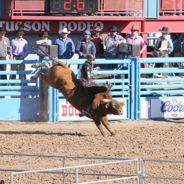 """Bull Riding"" stock image"