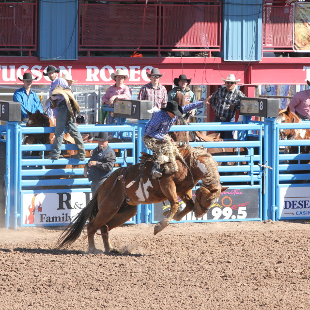 """Bronco Riding"" stock image"